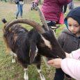 Les petits futés étaient de sortie à la ferme pédagogique de Dammarie les Lys le 28 février !